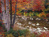 Swift River with Aspen and Maple Trees in the White Mountains  New Hampshire  USA