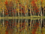 Fall Foliage and Birch Reflections  Hiawatha National Forest  Michigan  USA