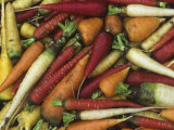 Genetic Variation and Diversity in Carrots  Daucus Carota