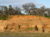 Soil Developed on River Deposits Sacramento Valley  California  USA