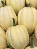 Harvest of Winter Squash (Cucumis Pepo)  'Cream of the Crop'