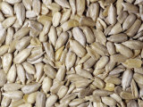 Raw Hulled Sunflower Seeds (Helianthus Annuus) North America