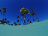 Coconut Palms on the Sandy Beach  Indonesia  Wakatobi Dive Resort  Sulawesi  Indian Ocean  Bandasea