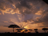 Crepuscular Sun Rays and Acacia Trees at Twilight  Masai Mara Game Reserve  Kenya  Africa