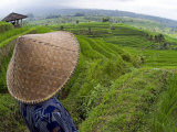 An Indonesian Worker Looks Out over Terraced Rice Paddies in the Interior of Bali  Indonesia