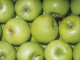 Apple Variety Granny Smith (Malus Domestica)  Native to Asia Minor