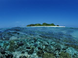 Corals in Shallow Water  Maldives  Indian Ocean  Meemu Atoll
