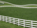 White Fence on Horse Farm  Bluegrass Region of Lexington  Kentucky