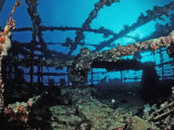 Scuba Diver Diving on Umbria Shipwreck  Sudan  Africa  Red Sea  Wingate Reef