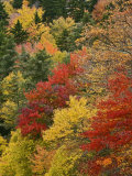Fall Colors in the Southern Appalachian Mountains  North Carolina  USA