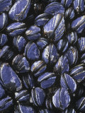 California Mussels  Mytilus Californianus  on Intertidal Rocks  California  Usa  Pacific Ocean