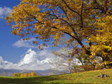 Single Tree and Distant Southern Appalachian Mountains in the Fall  North Carolina  USA