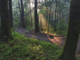 Sunlight Streaming Through Hardwood Forest on Path to Laurel Falls  Great Smoky Mountains NP TN