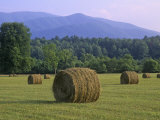 Hay Bales  Cades Cove  Great Smoky Mountains National Park  Tennessee  USA