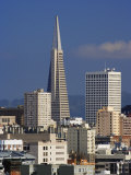 San Francisco Skyline and Trans America Building  San Francisco  California  USA