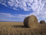 Rolled Hay Bales under a Blue Sky