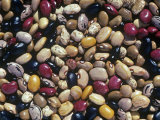 Bean Varieties