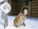 Dog Sitting on Snow  45 Degrees Below Zero Fahrenheit