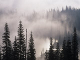 Mountain Mist and Fog in the Coniferous Forest of Mt Rainier National Park  Washington  USA