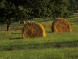 Hay Bales at Sunrise  Louisville  Kentucky  USA