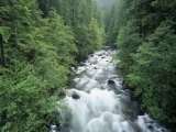 Ohanapecosh River  Mt Rainier National Park  Washington  USA