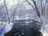 Snowy Forest Scene Along the Blue River  Indiana  USA