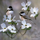 Chickadee