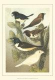 Pet Songbirds IV