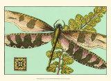 Dragonfly on Aqua IV