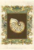 Mermaid's Shells II