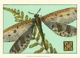Dragonfly on Aqua III