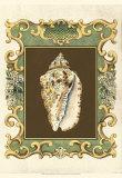 Mermaid's Shells V
