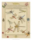 Dragonfly Manuscript IV