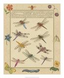 Dragonfly Manuscript III