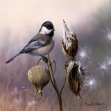 Chickadee and Milkweed