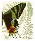 Butterfly Symmetry II