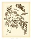Nature Study in Sepia II