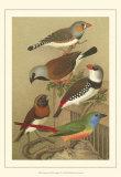Pet Songbirds I