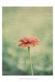 Flower Portrait III