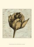 Tulip Impressions III