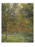Lemon Trees  1884