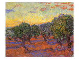Grove of Olive Trees  1889