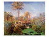 House Among the Palms  1884