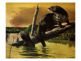 Otters Fear Forest Fire  1952