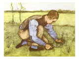 Cutting Grass with Sickle  1881