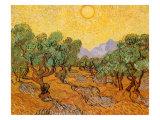 Sun over Olive Grove, 1889 Giclée par Vincent Van Gogh