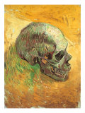 Skull in Profile  1887