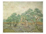 The Olive Orchard  1889