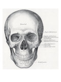 Human Skull  1858