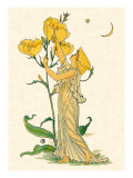 Evening Primrose Nymph  1889